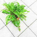 Green Fern Plant On A Tile Floor Royalty Free Stock Photography - 64734827