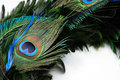 Peacock Feather Eye Royalty Free Stock Images - 6483969