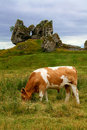 Grazing Cow Stock Images - 6489634