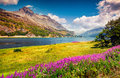 Sunny Summer Scene On The Silsersee Lake Royalty Free Stock Image - 64831086