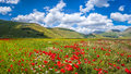 Piano Grande Summer Landscape, Umbria, Italy Stock Photo - 64887140
