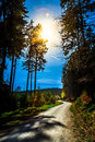Forest And The Road In Bright Sunny Day Stock Photos - 64894633
