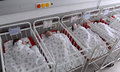 Unidentified New Born Babies In Maternity Hospital On January 8, 20016 In Sofia , Bulgaria Royalty Free Stock Photography - 64904837