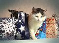 Siberian Cat Among Christmas New Year Present Bag Stock Images - 64905464