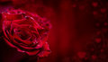 Rose. Red Roses.  Bouquet Of Red Roses. Several Roses On Granite Background. Valentines Day, Wedding Day Background. Royalty Free Stock Photos - 64921338