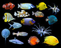 Great Collection Of A Tropical Fish Stock Images - 64924334