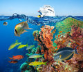 Colorful Underwater Reef With Coral And Sponges Royalty Free Stock Photo - 64990055