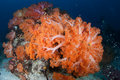 Colorful Soft Corals On Deep Reef Stock Photography - 64998112