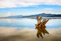 Antelope Island State Park Royalty Free Stock Image - 65045166