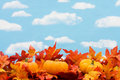 Fall Harvest Royalty Free Stock Images - 6514819