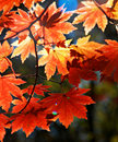Autumnal Ornament Stock Photo - 6515900