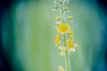 Stem  With Small Yellow Flowers On Blurred Background Royalty Free Stock Photos - 65167298