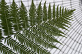 Close Up Of Fern Royalty Free Stock Images - 65248589