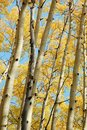 Autumn Forests Stock Image - 6535361