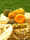 Thanksgiving Stock Images - 6535584