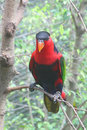 Parrot Stock Image - 6536721