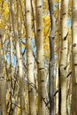 Autumn Forests Royalty Free Stock Image - 6548016
