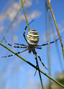 Spider Royalty Free Stock Photography - 6548717