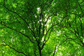 Forest Stock Photo - 6549720