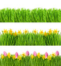 Spring Narcissus Tulip Flowers. Green Grass Water Drops Royalty Free Stock Photos - 65425248