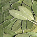 Salvia (sage, Also Called Garden Sage, Or Common Sage) Stock Photography - 65434052