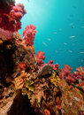 Moray In Reef Royalty Free Stock Images - 65476629