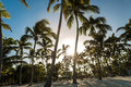 Tropical Beach In A Sunny Day Royalty Free Stock Photography - 65486487