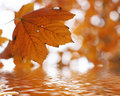 Autumn Leafs Above The Water Royalty Free Stock Photos - 6554178