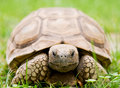 Turtle Stock Photo - 6557020
