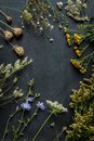 Late Summer Meadow Flowers And Plants On Black Chalkboard Royalty Free Stock Photos - 65521118