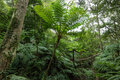 Tropical Rainforest Jungle With Tree Ferns, Okinawa, Japan Royalty Free Stock Images - 65535889