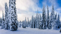 Winter Landscape On The Mountains With Snow Covered Trees Stock Images - 65586324