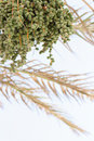 Date Palm Stock Photography - 6565612