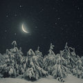 Beautiful Winter Nature Night Landscape. Pine Trees Covered Snow Stock Photo - 65625060