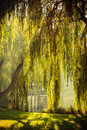 Park With Pond And Willow Trees Royalty Free Stock Photo - 65634435