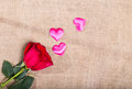 Red Rose On A Sacking And Randomly The Scattered Pink Satin Hear Stock Images - 65699394