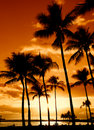 Tropical Sunset Royalty Free Stock Photography - 6571397