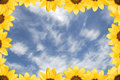 Sunflowers And Blue Sky Royalty Free Stock Image - 6577896