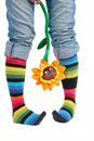 Two Feet In Multi-coloured Socks And Sunflower Royalty Free Stock Image - 6579506