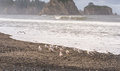 Scene Of Seagull On The Beach With Rock Stack Island On The Background In The Morning In Realto Beach,Washington,USA.. Stock Image - 65716561