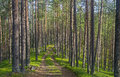 The Old Forest Road. Royalty Free Stock Photography - 65738967
