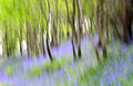 Abstract Bluebells Stock Images - 65785734
