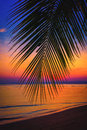 Silhouette Coconut Palm Trees On Beach At Sunset. Royalty Free Stock Images - 65797939