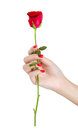 Sexy Woman Hand With Red Nails Holding Rose. Stock Image - 65801401