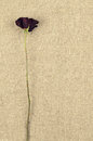 One Long Dry Red Rose On Linen  Canvas Background Royalty Free Stock Image - 65808936