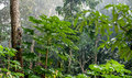 Natural Jungle Background. Tropical Rain Forest In The Morning Mist Royalty Free Stock Photography - 65811937