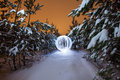 Glowing Ball In A Pine Forest Stock Photos - 65814543