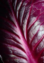 Red Cabbage Leaf Stock Images - 65856104