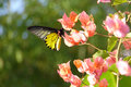 Butterfly In Tropical Garden Stock Images - 65877484