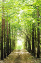 Road In The Forest Royalty Free Stock Image - 6593556